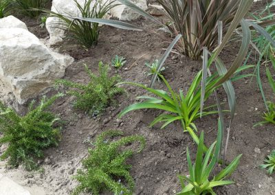 Coastal grasses and flowers planted at the entrance to the prom and beach, October 2020