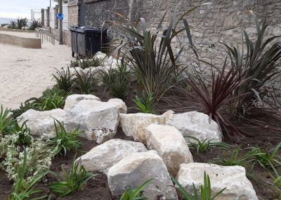 Coastal grasses and flowers planted at Shore Road